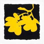 Lantern Flowers, May 10, 2012 (Yellow)