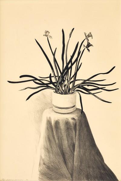 Potted Daffodils von David Hockney