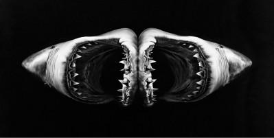Robert Longo, Double Shark, 2010