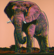 "African Elephant (FS II.293) from the Portfolio ""Endangered Species"""