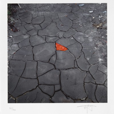 Red leaves on cracked earth von Andy Goldsworthy