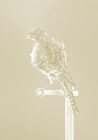 Canaries von Carsten Höller