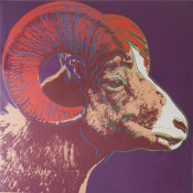 "Bighorn Ram (FS II.302) from the Portfolio ""Endangered Species"""