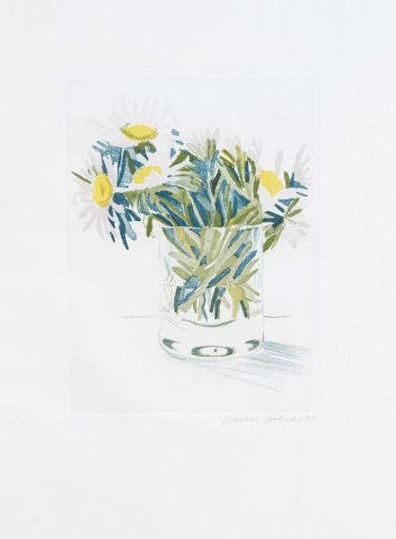 David Hockney, Marguerites, 1973