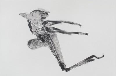 Puppen von Carsten Höller